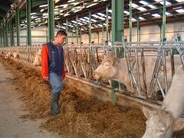 Avenir des éleveurs laitiers