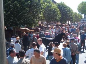 foire-aux-chevaux-05.06.06-004-800x600-300x225