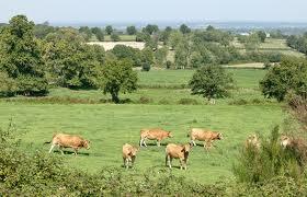 Elevage : le ministre de l'agriculture Didier GUILLAUME apporte des précisions sur les aides européennes à la filière veau