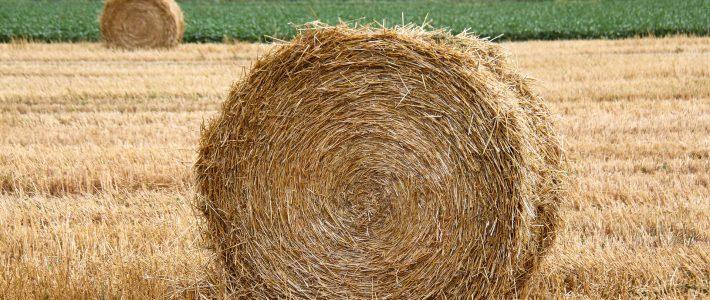 Mise en œuvre dans le Tarn de la clause de force majeure et avance d'1Md€ pour aider les éleveurs touchés par la sécheresse